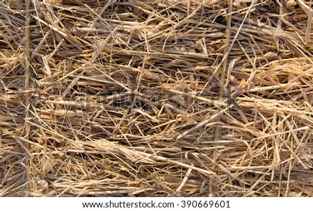 Close view of an icy bale of hay in the early morning light. - stock photo