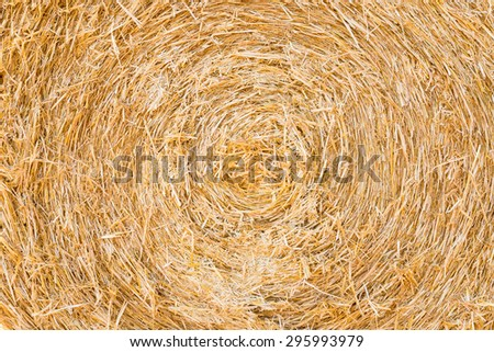 close view of circular bale pressed with straw - stock photo
