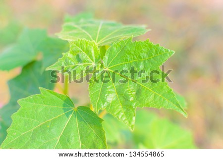 close view of green leaf