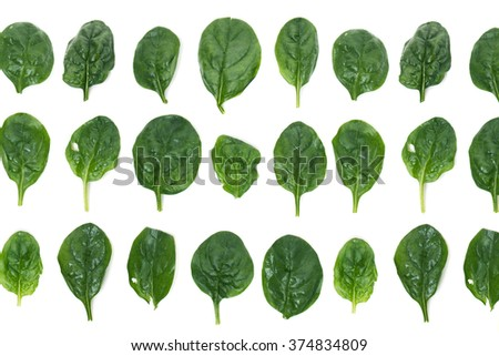 Close view of spinach leafs aligned in rows, isolated on a white background.