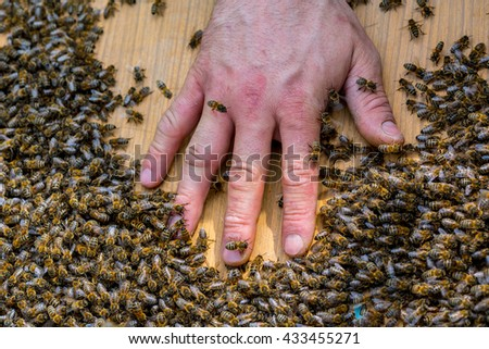 Close view on the hand of beekeeper in the swarm of bees on the beehive - stock photo