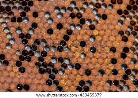 Close view on the honeycomb in the beehive - stock photo
