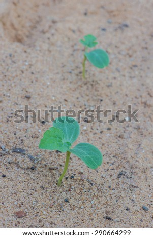 close young green sprout grow in sand - stock photo