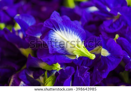 Closed up butterfly pea flower