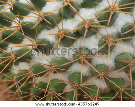 Closed up cactus spine - stock photo