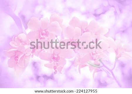 Closed-up of Wild Orchid with Dreamy Glow Color Effect. - stock photo