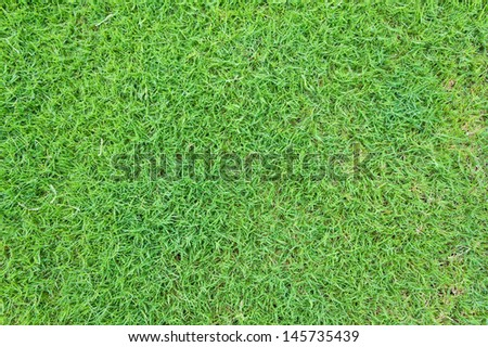 closed up shot of the green grass for background - stock photo