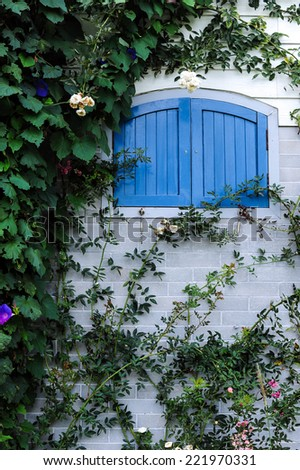 Closed window and a wall covered with plant - stock photo