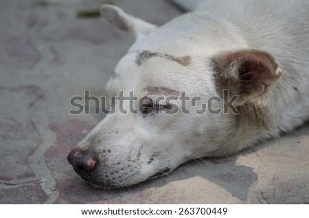 Closeup a head of so sleeping dog - stock photo