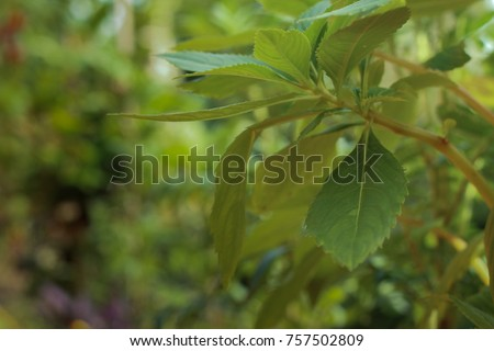 Closeup and focus leaf