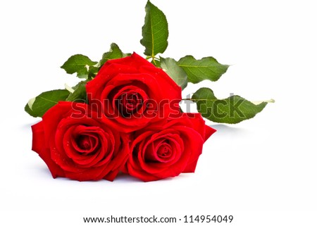closeup and isolated beautiful red rose Thailand