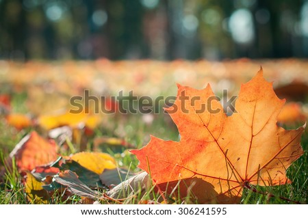 closeup autumn yellow  leave. natural vintage background - stock photo