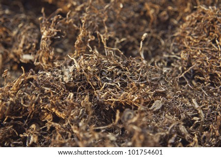 closeup background of dried tobacco smoking - stock photo