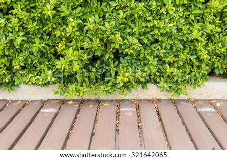 Closeup beautiful wood pathway in the garden - stock photo