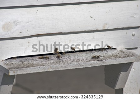 Closeup Bee-House and flying bees. - stock photo
