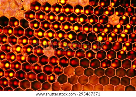 Closeup Beehive for Background Uses.