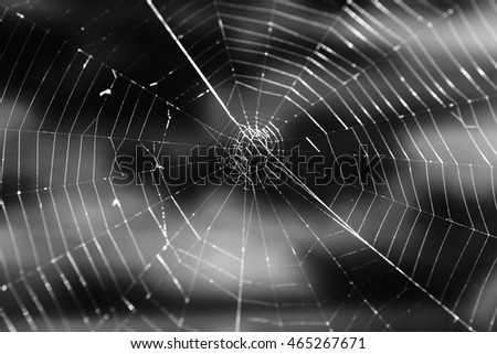 Closeup black and white photo of spider web, selective focus