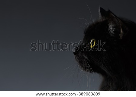 Closeup Black Cat Face in Profile view on Dark Background - stock photo