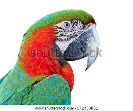 Closeup  Blue and Gold Macaw , thailand - stock photo