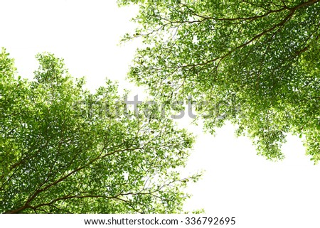 closeup branch of trees on white background