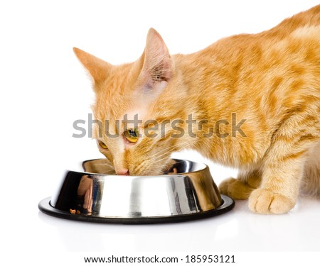 closeup cat eating food. isolated on white background - stock photo