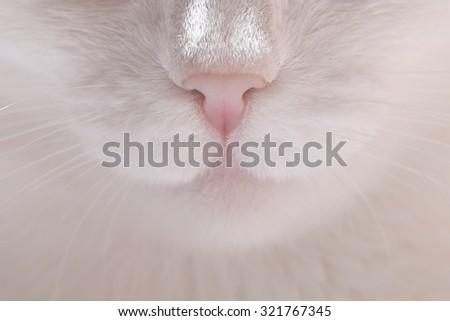 Closeup cat nose and mustache. - stock photo