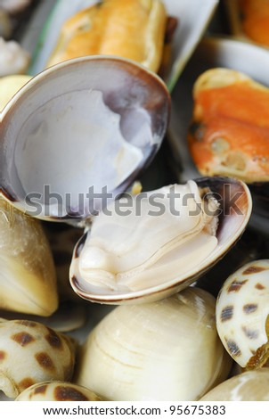 closeup clam - stock photo