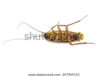 Closeup cockroach isolated on a white background