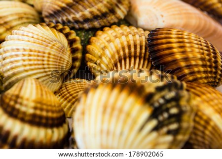 Closeup collection of many seashells - stock photo