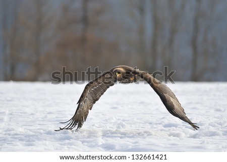 Closeup detail on head of golden eagle in his natural environment - stock photo