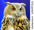Closeup Eurasian Eagle Owl - stock photo