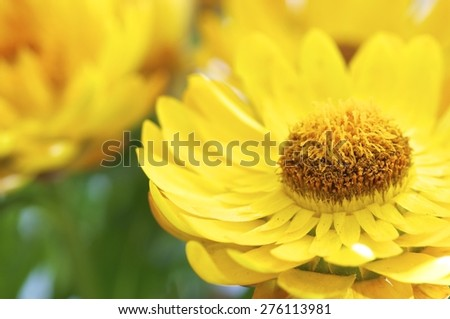 closeup, extraordinary, blooming, natural, vibrant, green, floral,  spring, petal, flower, vector, yellow, bright, head, sunny, sunflower, orange, summer, blossom, bloom, sun, daisy, abstract, macro - stock photo