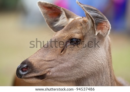 Closeup eye and portrait of a young deer - stock photo