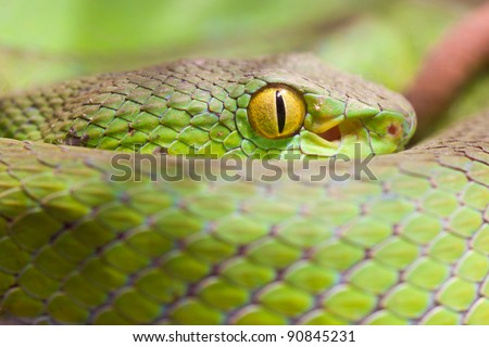 Closeup eye of snake - stock photo