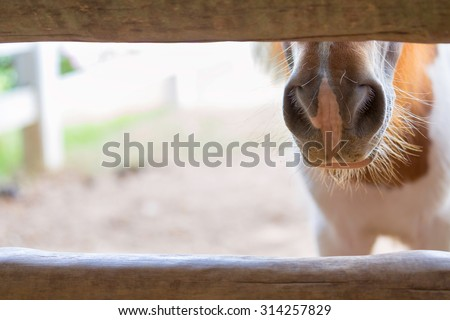 Closeup face of horse in stable - stock photo