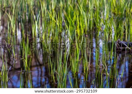 closeup flooded grass - stock photo