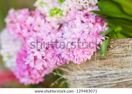 Closeup flowering pink hyacinth on a soft background - stock photo