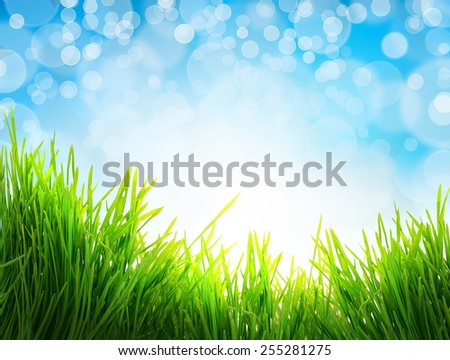 closeup fresh green  grass isolated, natural easter background - stock photo