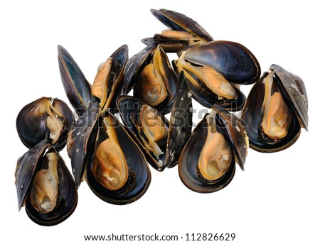 Closeup fresh mussel,  isolated on white. - stock photo