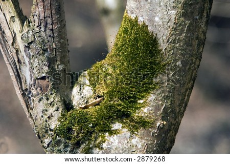 Closeup from a  tree with green moss on it