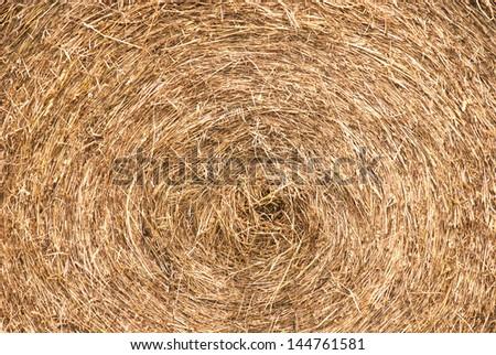 closeup grass hay bale - stock photo