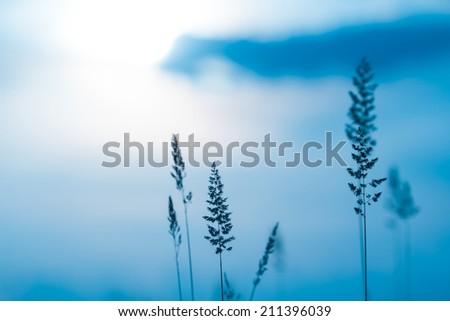closeup grass on a blue sky background - stock photo