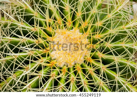Closeup Green Cactus ,thorny fast growing hexagonal shape cacti perfectly close captured in Thailand. - stock photo