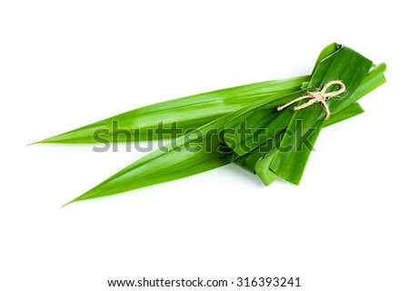 closeup green fresh Pandan leaves, Thai herbal
