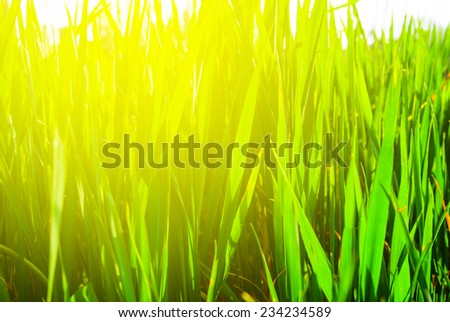 closeup green grass - stock photo