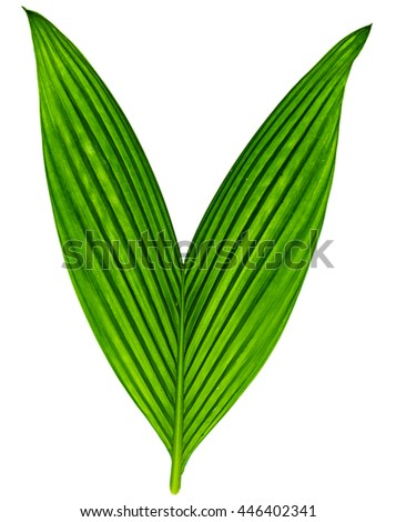 Closeup green leaf in back side with isolated background