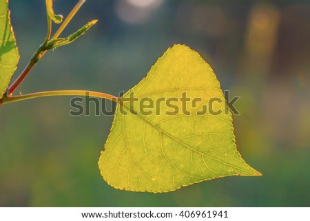 closeup green leaf on a branch - stock photo