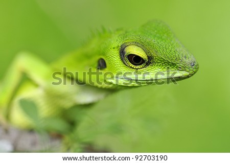 closeup green  lizard  in green nature