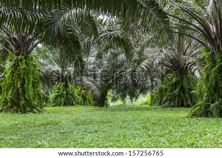 Closeup green of tropical forest palm tree