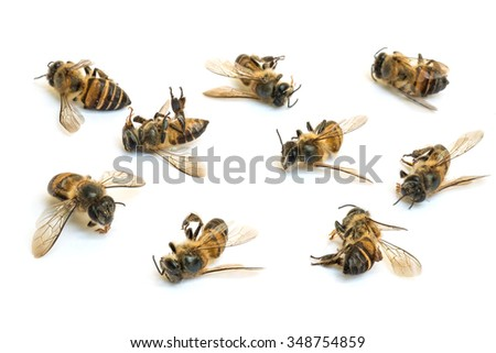 Closeup group of dead bee isolated on white background - stock photo
